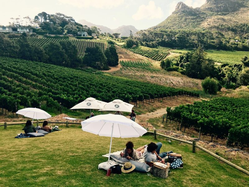 The South African vineyards are not only for wine tasting, but also to enjoy the life that comes with it.